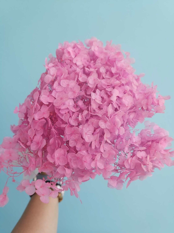 Гортензия розово-сиреневая стабилизированная