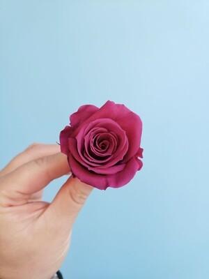 Роза клюква 3-4см стабилизированная Эквадор