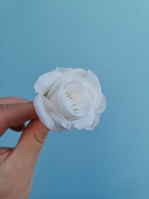 Роза белая 3-4см стабилизированная
