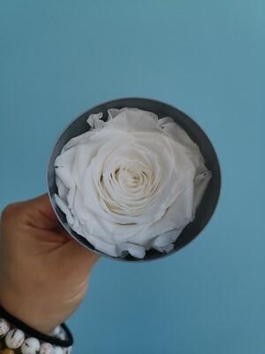 Роза белая 4-5см стабилизированная