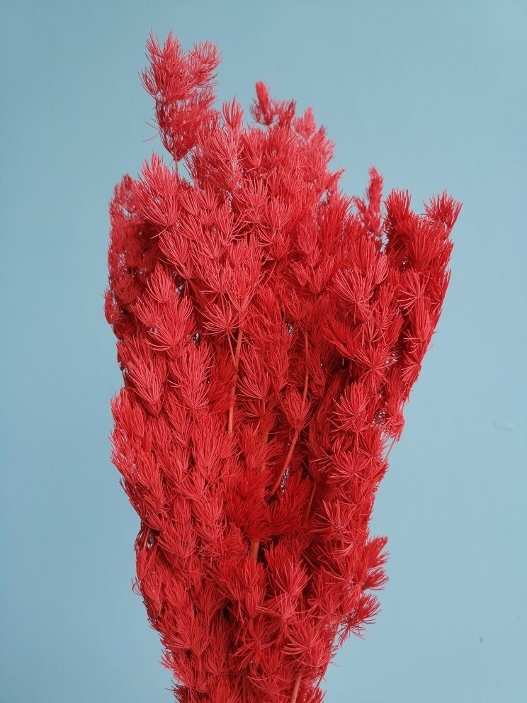 Asparagus red stabilized