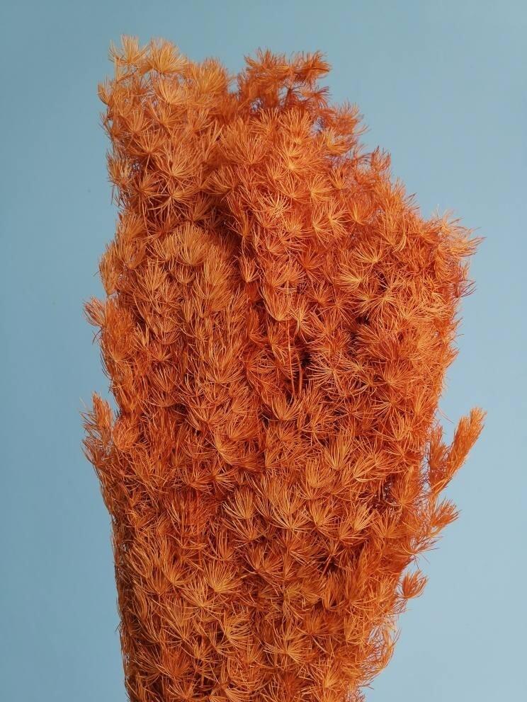 Asparagus stabilized ocher