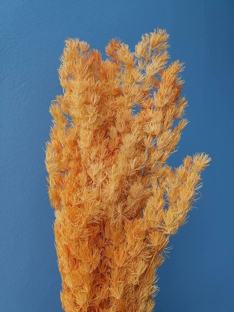 Asparagus stabilized orange