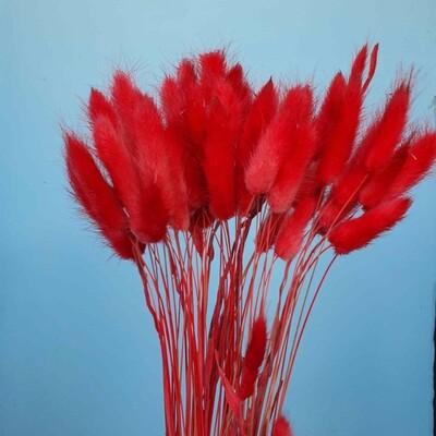 Lagurus dried flowers red sangria