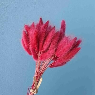 Lagurus dried raspberry