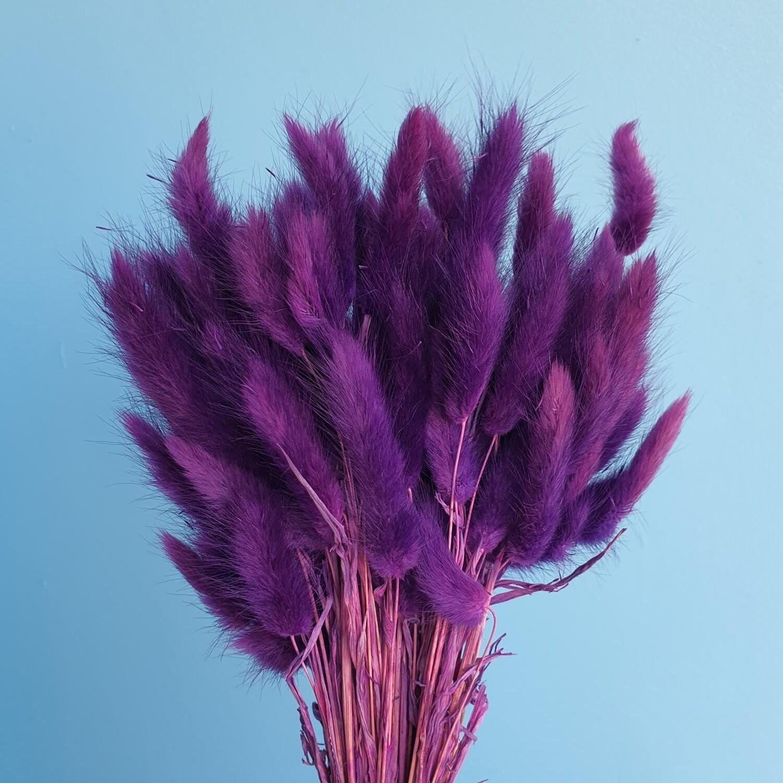 Лагурус фиолетовый Краснодар