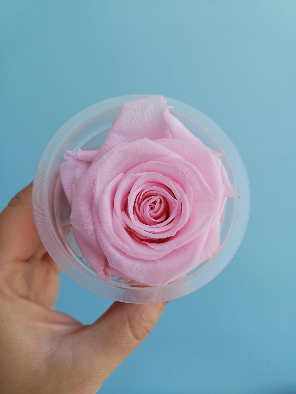 Роза розовая baby pink 6см стабилизированная Эквадор