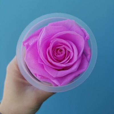 Роза розовая orchid 6см стабилизированная