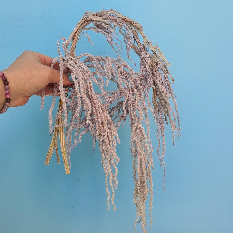 Amaranth stabilized gray-lilac