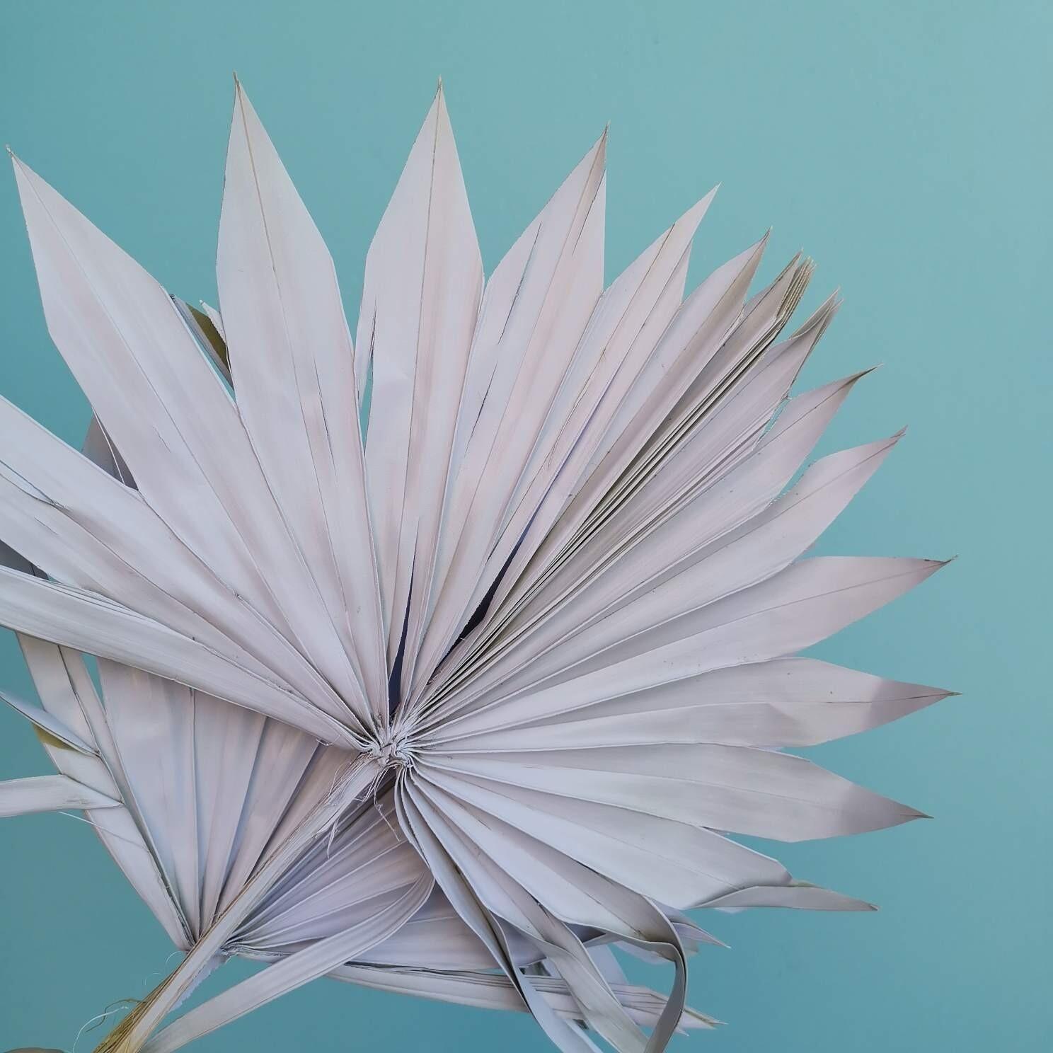 Листья пальмы сухие веером сиреневые 3шт