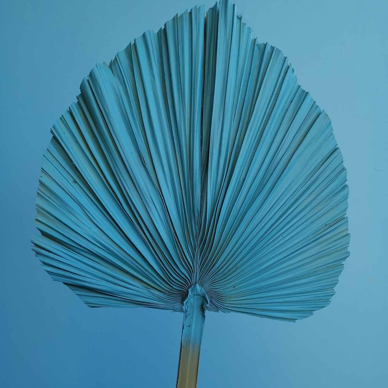 Palm leaf spear natural dried sea wave