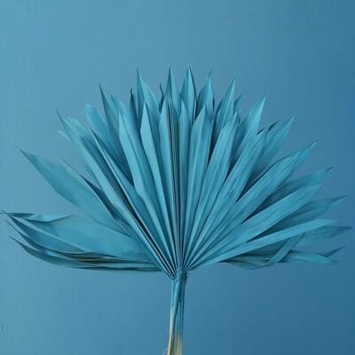 Palm leafs natural dried sea wave