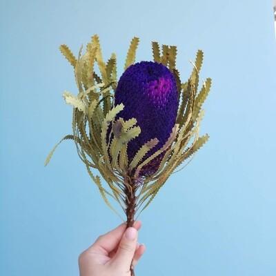 Банксия фиолетовая