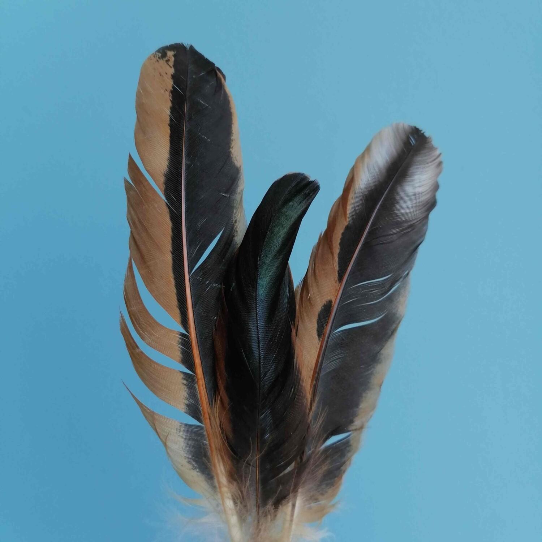 Перо птицы коричневое Натуральное 3шт