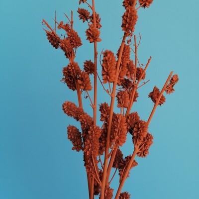 Сухоцвет (шишки, колючки) оранжевый