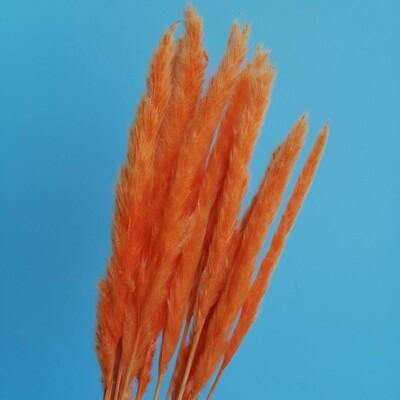 Пампасная трава мини морковная