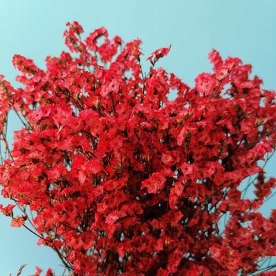 Limonium stabilized red