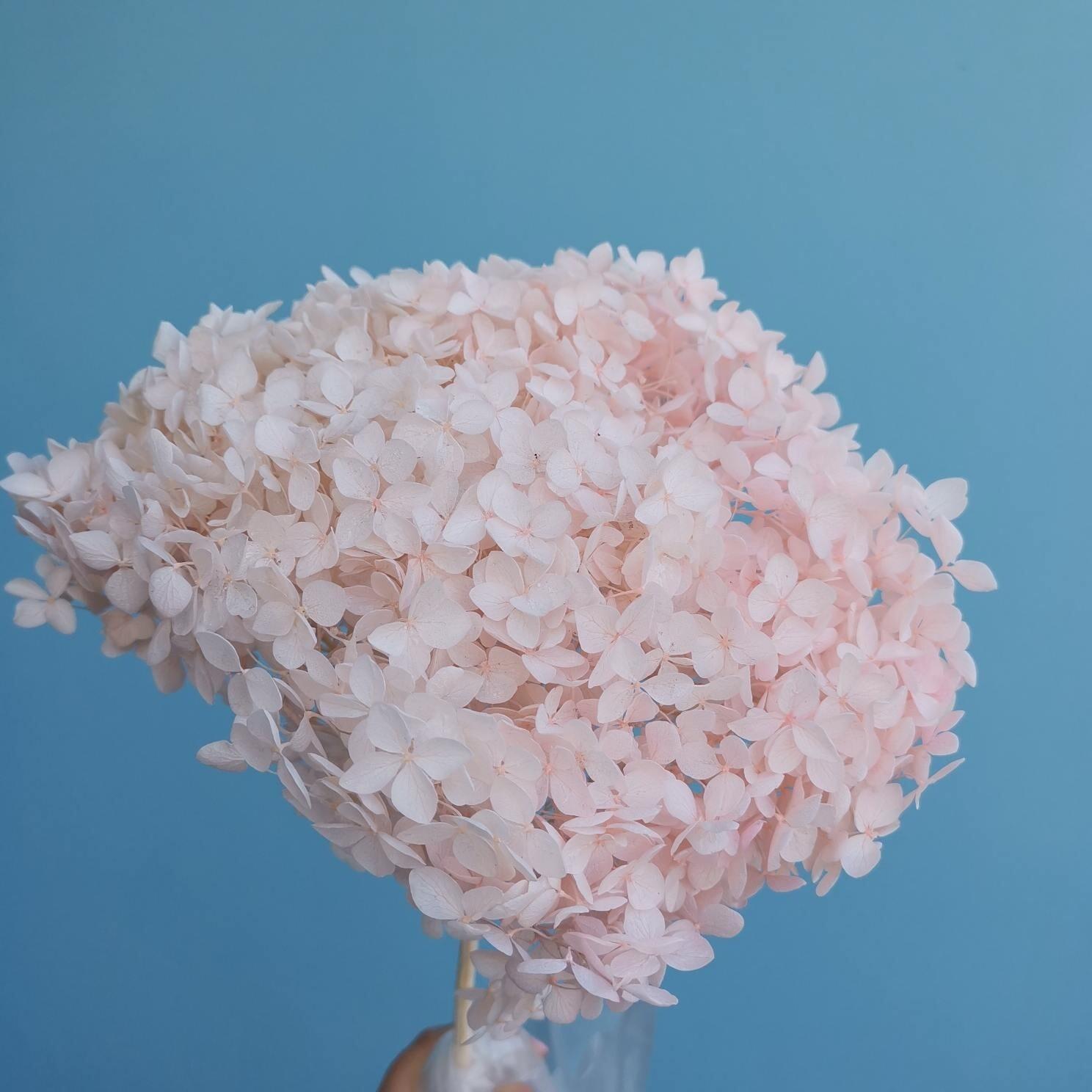 Гортензия розовая зефирная стабилизированная