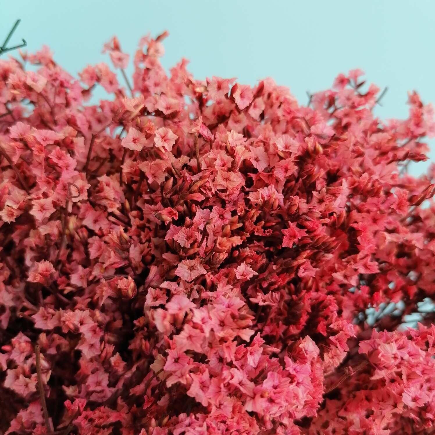 Limonium stabilized pink