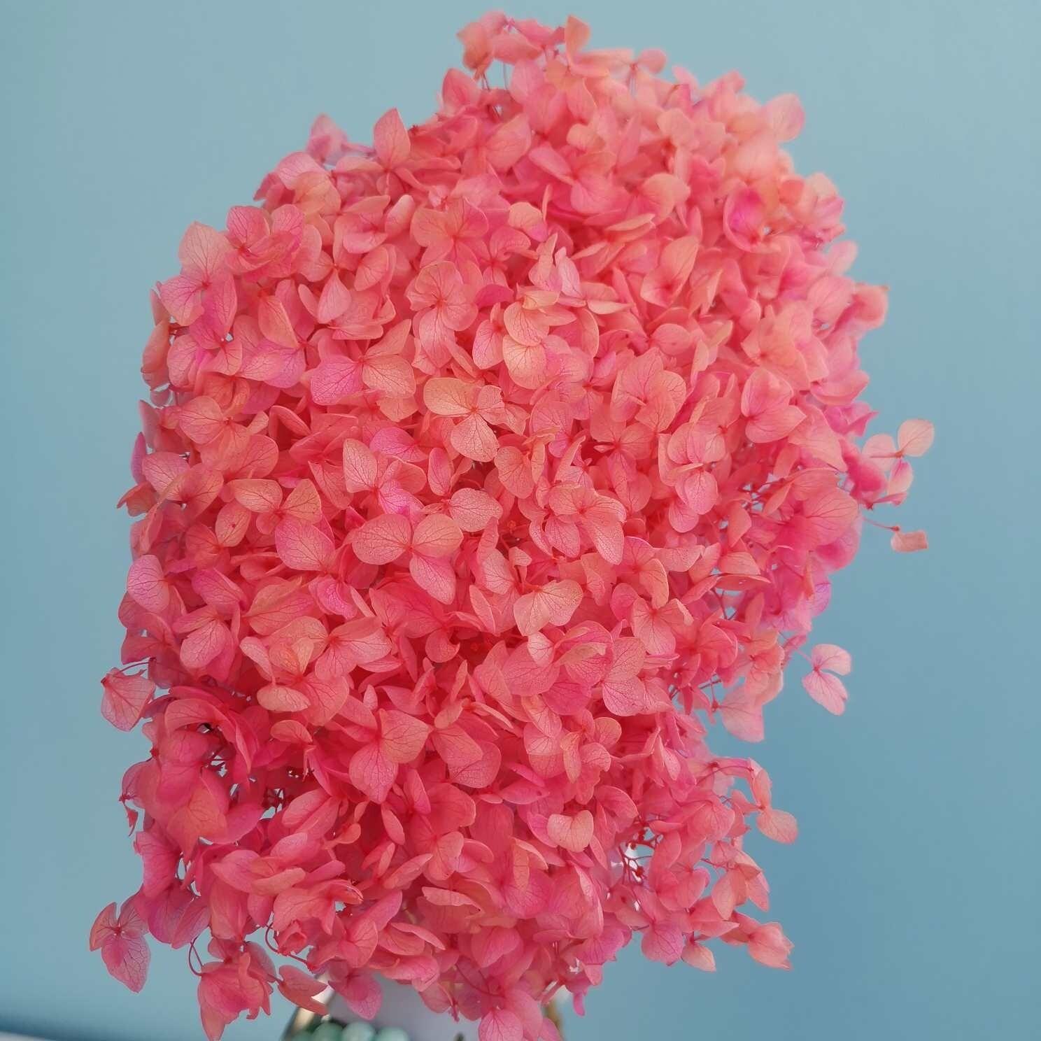 Hydrangea pink bright stabilized