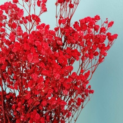 Gypsophila stabilized red
