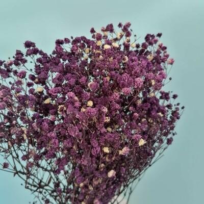 Gypsophila stabilized violet