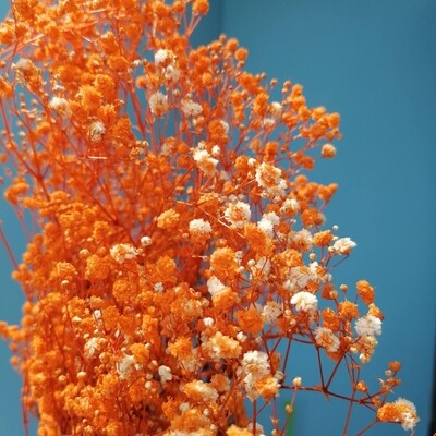 Gypsophila stabilized orange