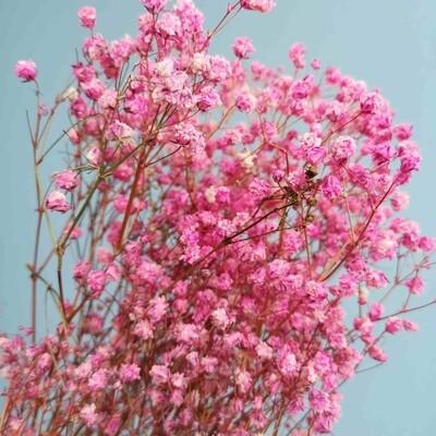 Gypsophila dried pink