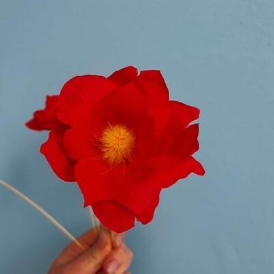 Poppy red stabilized