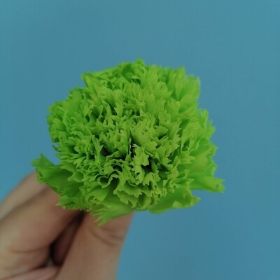 Carnation green stabilized (bud)
