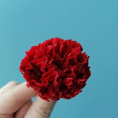 Carnation red stabilized (bud)
