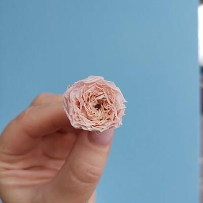 Роза розовая 2-2,5см пионовидная стабилизированная