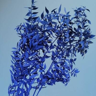 Рускус синий