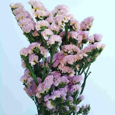 Statice stabilized lilac