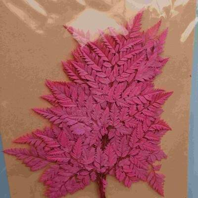 Папоротник розовый яркий стабилизированный