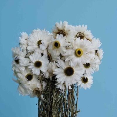 Acrolinium white