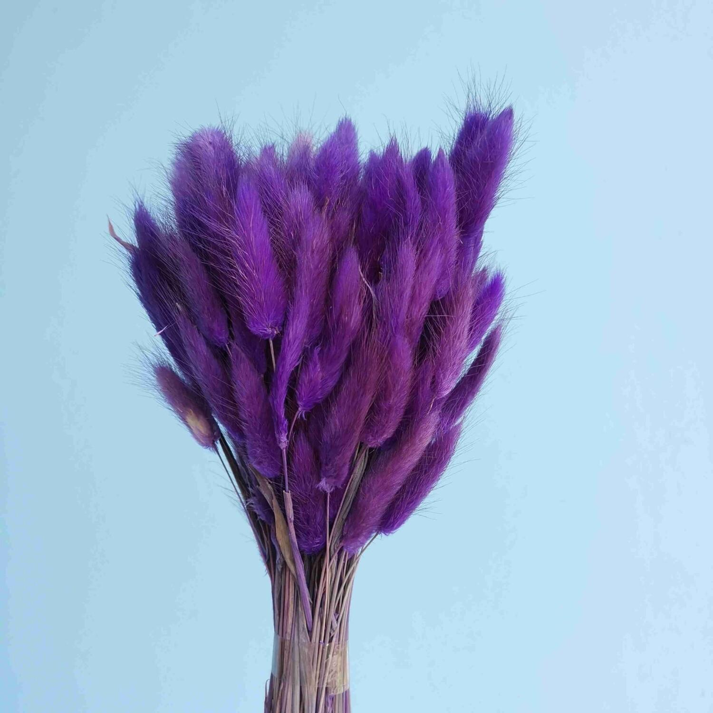 Lagurus purple dried
