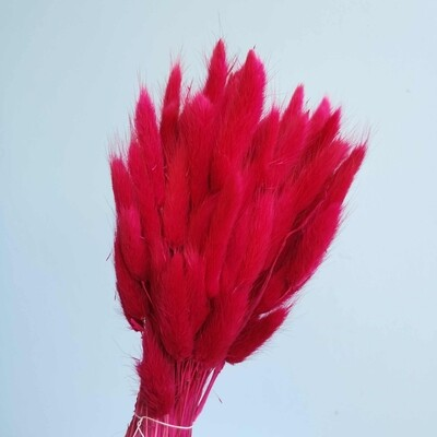 Lagurus dried raspberry fuchsia