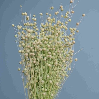 Flax light green