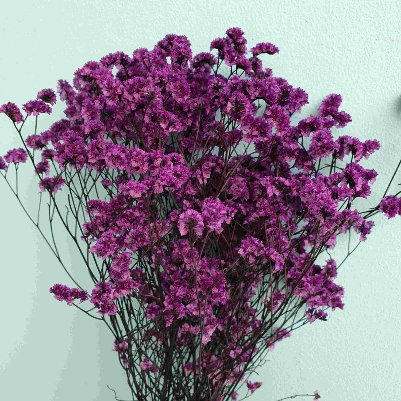 Лимониум фиолетовый стабилизированный