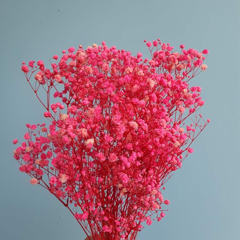 Gypsophila stabilized hot pink