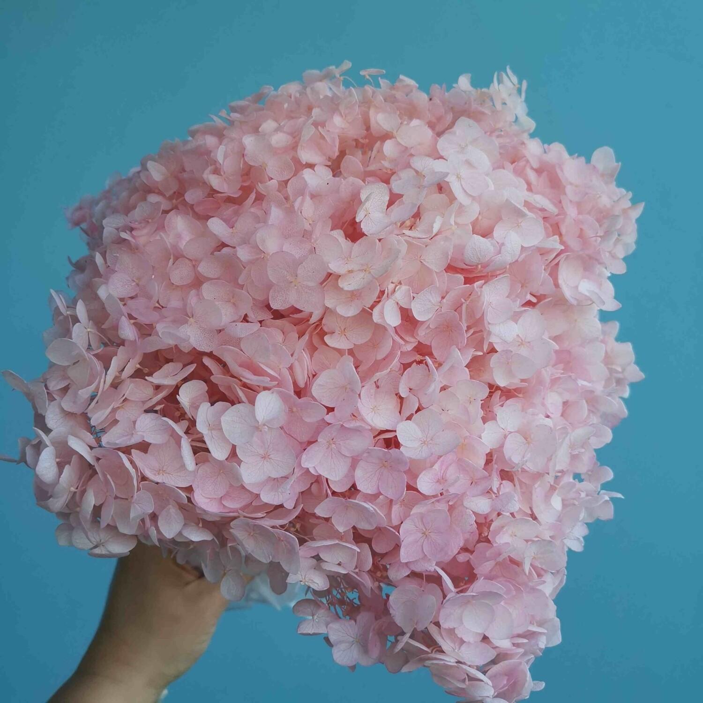 Гортензия розовая нежная стабилизированная