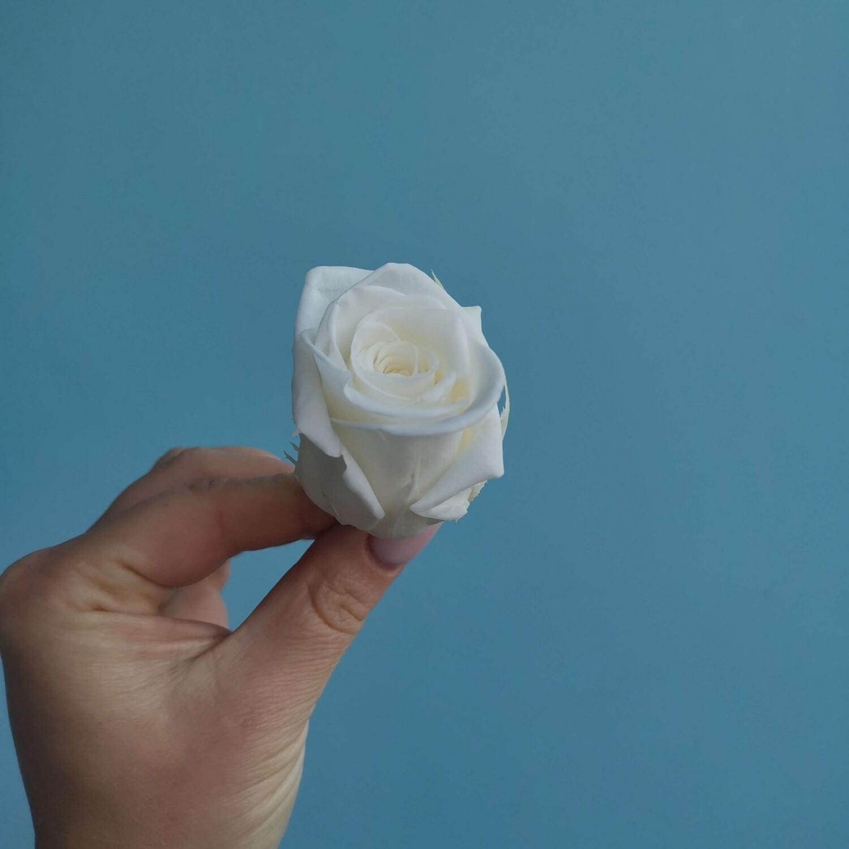 Роза белая 3,5см стаб Китай