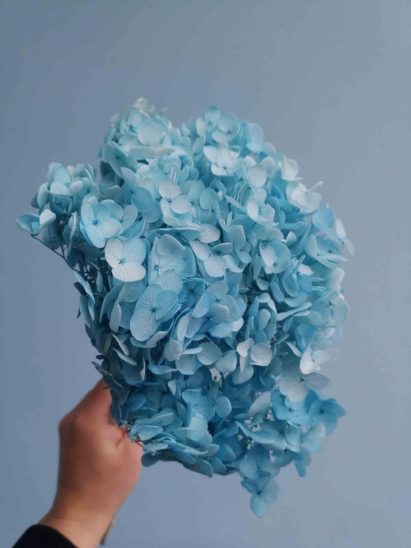 Hydrangea light blue stabilized