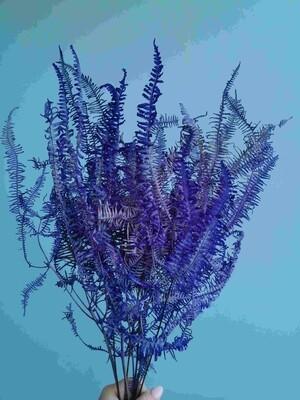 Папоротник ферн фиолетовый