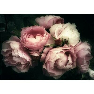 Mood Florals