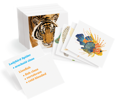 Animal Kingdom Cards