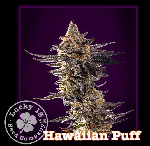 Hawaiian Puff