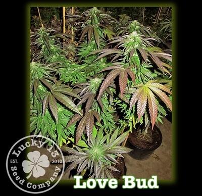 Love Bud