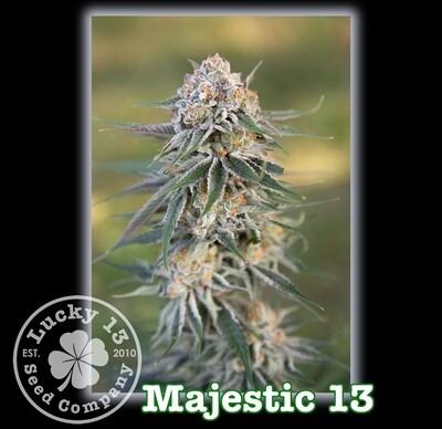 Majestic 13